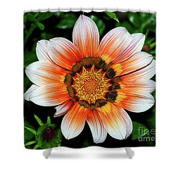 Shower Curtain featuring the photograph Pretty Gazania By Kaye Menner by Kaye Menner