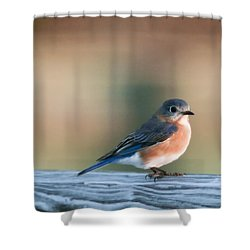 Pretty In Blue Shower Curtain by Phill Doherty