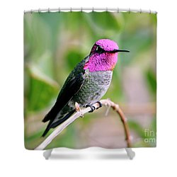 Pretty In Pink Anna's Hummingbird Shower Curtain