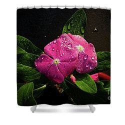 Pretty In Pink Shower Curtain by Douglas Stucky
