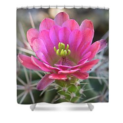 Shower Curtain featuring the photograph Pretty In Pink Hedgehog  by Saija Lehtonen