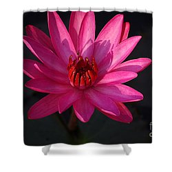 Pretty In Pink Shower Curtain by John S