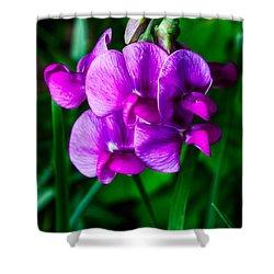 Pretty In Pink Wild Orchids Shower Curtain by John Haldane