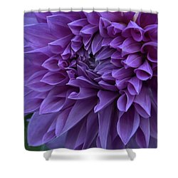 Pretty In Purple Shower Curtain by Patricia Strand