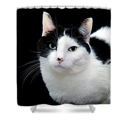 Pretty Kitty Cat 1 Shower Curtain by Andee Design