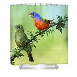 Pretty Painted Buntings Perched Shower Curtain
