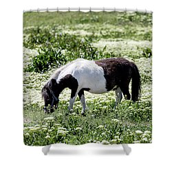 Pretty Painted Pony Shower Curtain by James BO Insogna