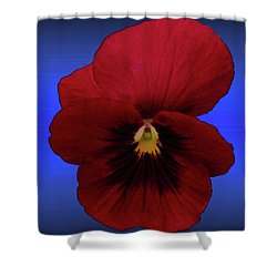 Shower Curtain featuring the photograph Pretty Pansy by Donna Brown