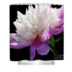 Pretty Pink Peony Flower Wall Art Shower Curtain