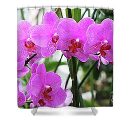 Pretty Pink Phalaenopsis Orchids #2 Shower Curtain