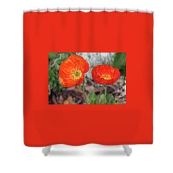 Pretty Poppies Shower Curtain