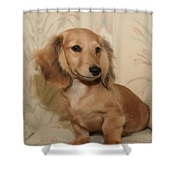 Pretty Pup Shower Curtain