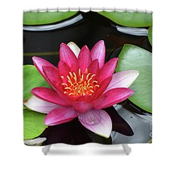 Pretty Red Water Lily Flowering In A Water Garden Shower Curtain