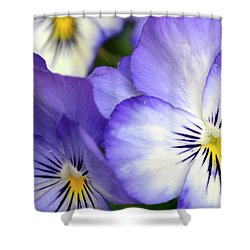 Pretty Violas Shower Curtain