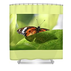 Preview - Shower Curtain