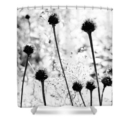 Prickly Buds Shower Curtain by Deborah  Crew-Johnson