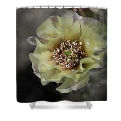 Prickly Pear Blossom 3 Shower Curtain