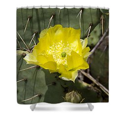 Prickly Pear Cactus Blossom - Opuntia Littoralis Shower Curtain