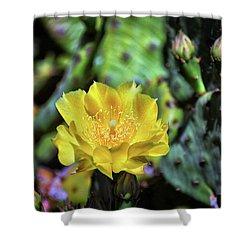 Prickly Pear Cactus Flower On Assateague Island Shower Curtain
