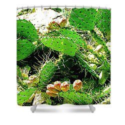 Prickly Pear Cactus Fruit Shower Curtain by Merton Allen
