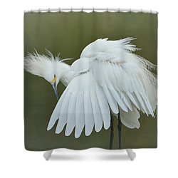 Prim And Preen 3 Shower Curtain