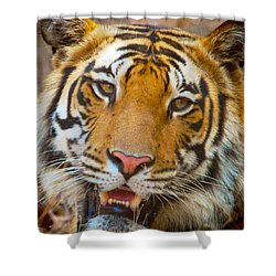 Prime Tiger Shower Curtain