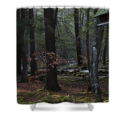 Primitive Forest W Birdhouse Shower Curtain