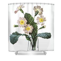 Primrose (primula Aucalis) Shower Curtain by Granger