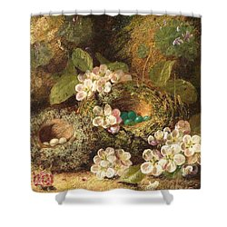 Primroses And Bird's Nests On A Mossy Bank Shower Curtain by Oliver Clare