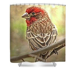 Shower Curtain featuring the photograph Prince  by Debbie Portwood
