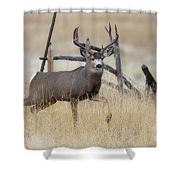 Prince Of The Prairie  Shower Curtain