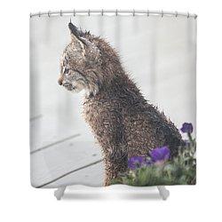 Profile In Kitten Shower Curtain