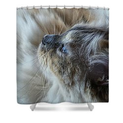 Profile Shower Curtain by Karen Stahlros