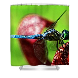 Shower Curtain featuring the photograph Profile Of A Dragonfly 003 by George Bostian