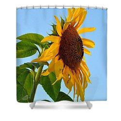 Profile Of A Sunflower Shower Curtain by Kathleen Sartoris