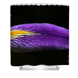 Profile Of An Iris Shower Curtain by Sabrina L Ryan
