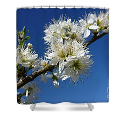 Promise Of Spring Shower Curtain by Jean Bernard Roussilhe