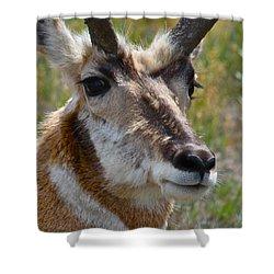 Pronghorn Buck Face Study Shower Curtain by Karon Melillo DeVega