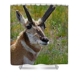 Pronghorn Buck Shower Curtain by Karon Melillo DeVega