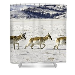 Pronghorns Shower Curtain