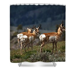 Pronghorns Shower Curtain