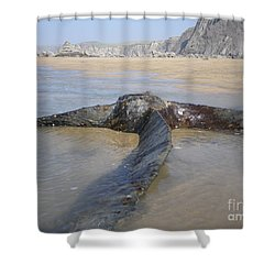 Propeller Steamship Belem Shipwreck Shower Curtain by Richard Brookes