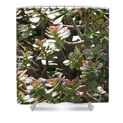 Prosperity And Success To You Shower Curtain by Doreen Whitelock
