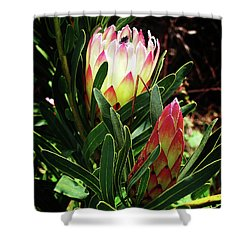 Protea Flower 3 Shower Curtain by Xueling Zou
