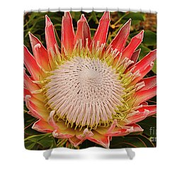 Protea I Shower Curtain by Cassandra Buckley