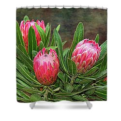 Shower Curtain featuring the photograph Proteas In Bloom By Kaye Menner by Kaye Menner