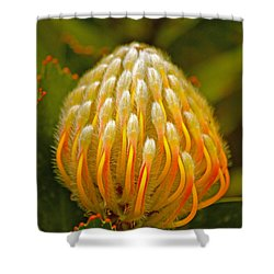 Proteas Ready To Blossom  Shower Curtain