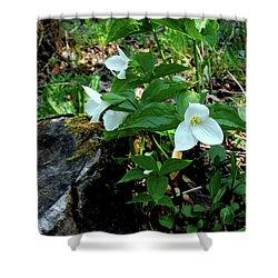 Shower Curtain featuring the photograph Protected Wild Trillium  by LeeAnn McLaneGoetz McLaneGoetzStudioLLCcom