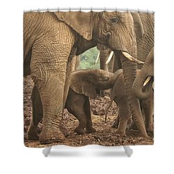 Shower Curtain featuring the photograph Protecting The Babies by Gary Hall