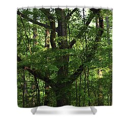 Shower Curtain featuring the photograph Protecting The Children by Skip Willits